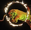 Цирки в Епифани